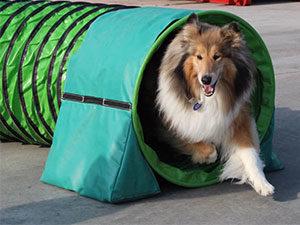 Agility hundens legeplads, Jeanettes Hundeskole