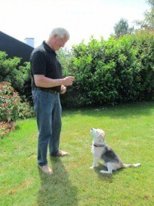 Hundetræning Nordsjælland - Jeanettes Hundeskole