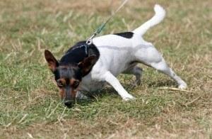 Lad din hund snuse på gåturen.