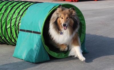 Soft Agility - Hundenes legeplads sammen med deres ejer